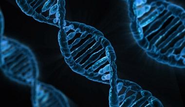 DNA 380x220